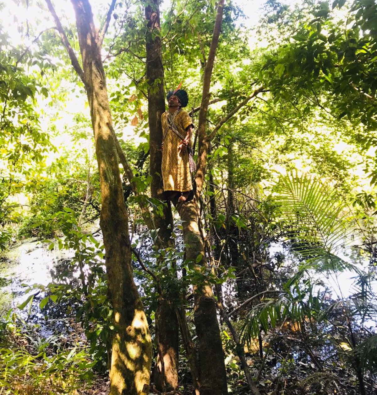 Ninawa stands at the crux of two branches high in a tree.