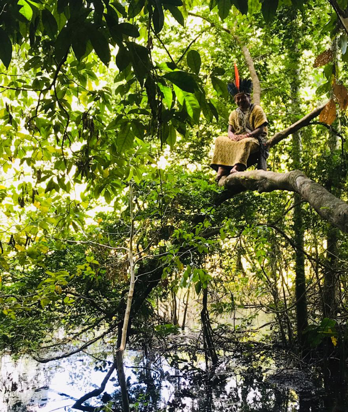 Ninawa sitting at the crux of two branches in a tree over water