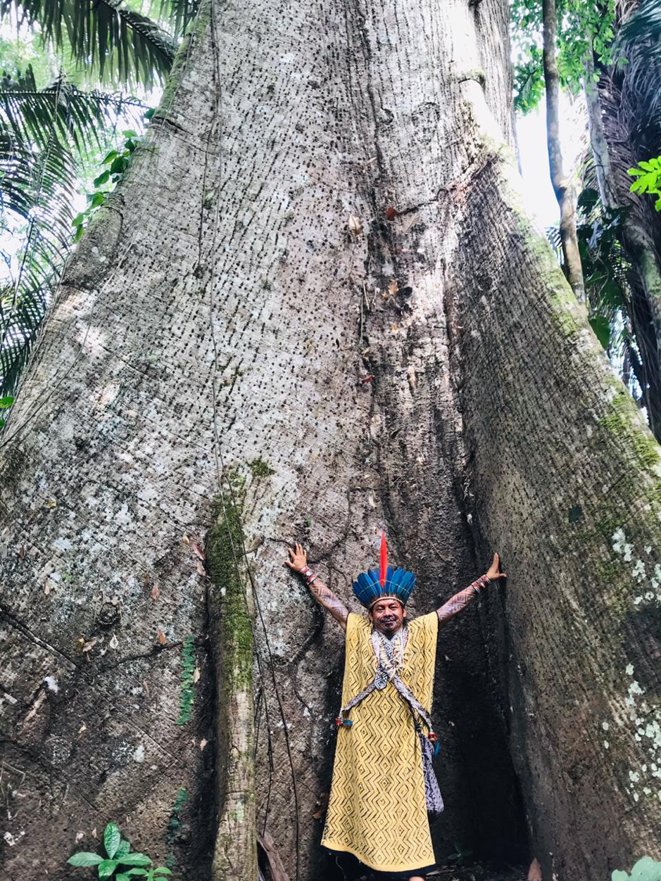 Ninawa stands at the base of a giant tree